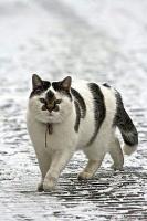 Кот Мицубиси Ланцер Х.jpg